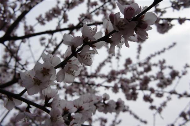 Full bloom, perfect timing
