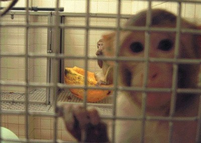 Primate Research at the University of Wisconsin-Madison