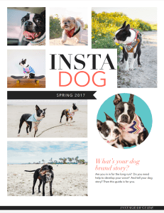 guide-on-how-to-use-instagram-for-your-dog