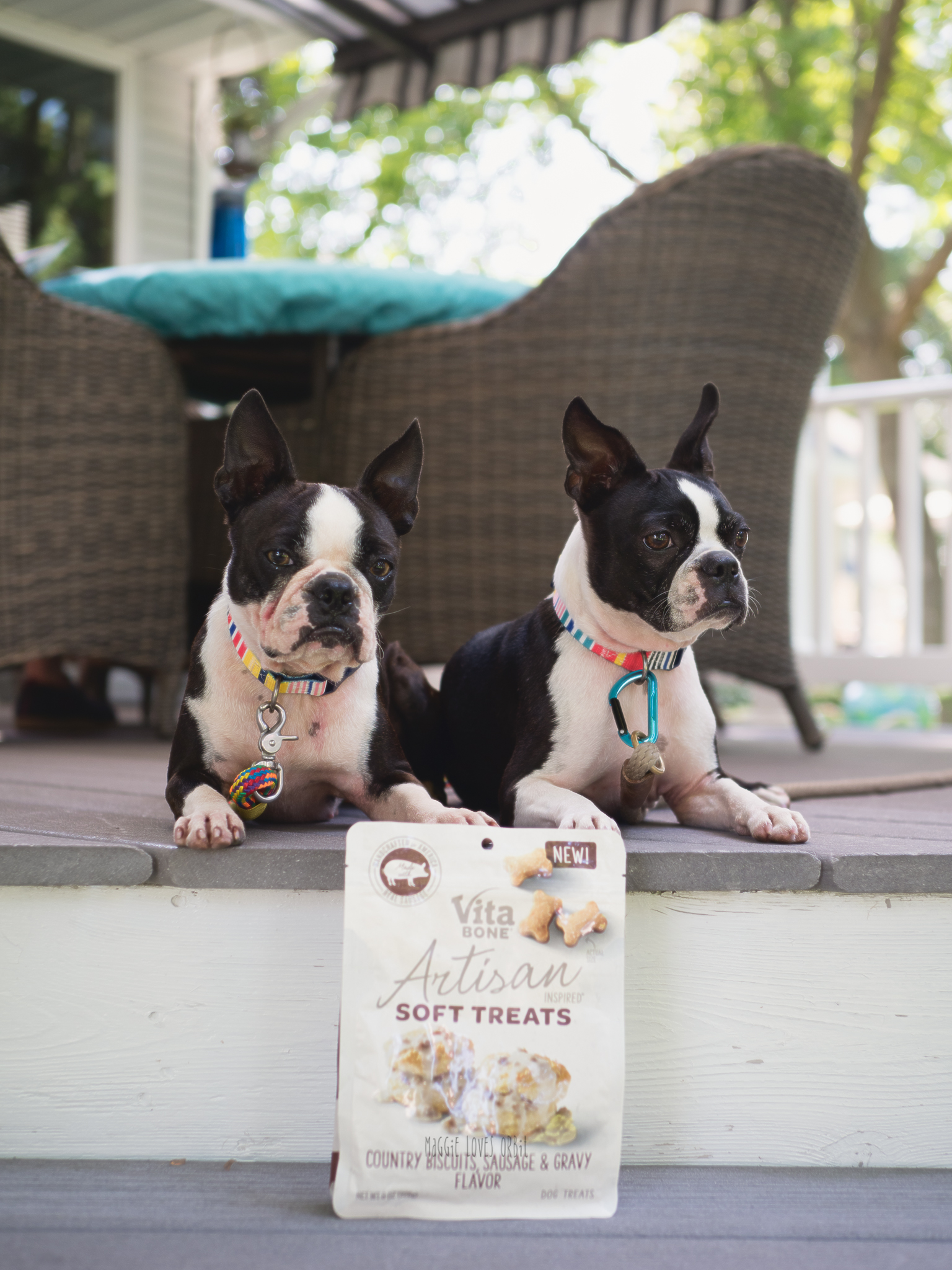 vitabone soft dog treats and my two boston terriers