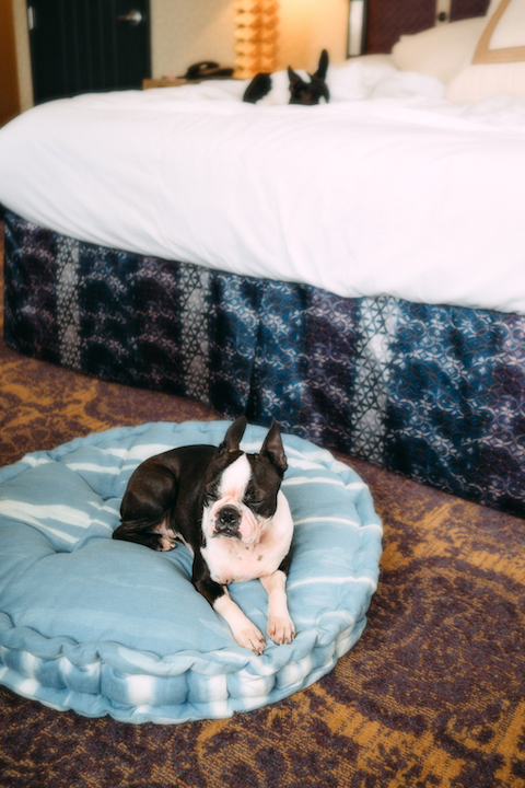 Even the hotel room has the cutest dog bed - pet friendly downtown san diego