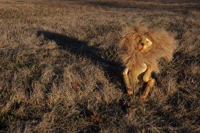 Lion enjoying late sun