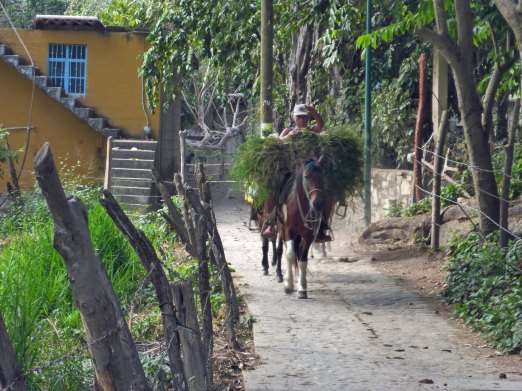 Yelapa horses at work