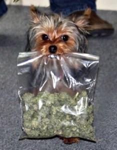 micro-drug-dog