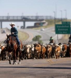 cheyenne-cattle-drive