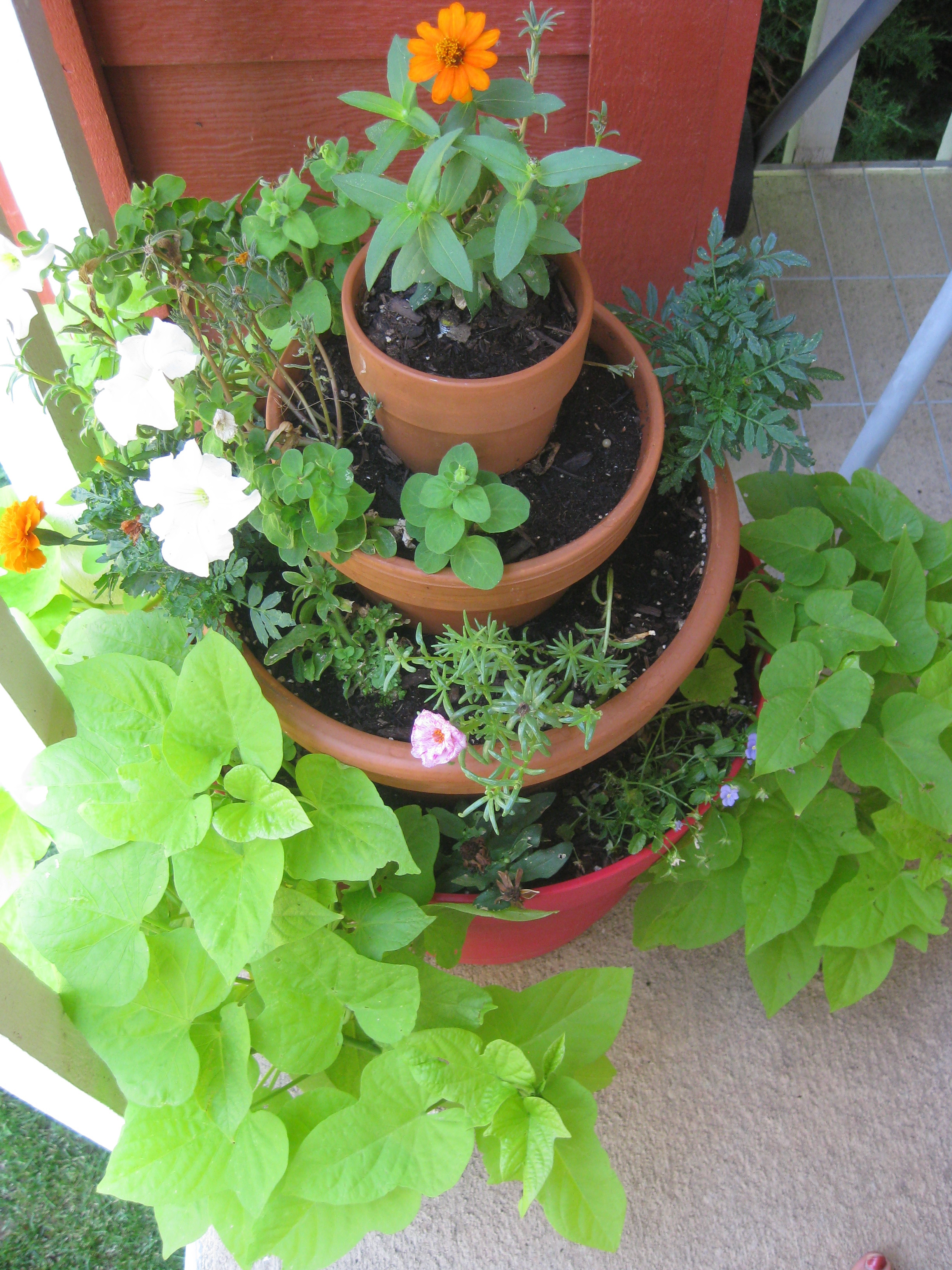 Small Space Gardening On A Budget
