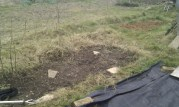 weeds cleared