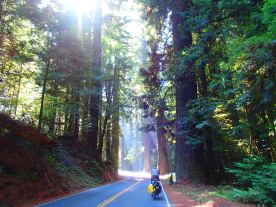 Riding through the ancient giant redwood groves in Northern California