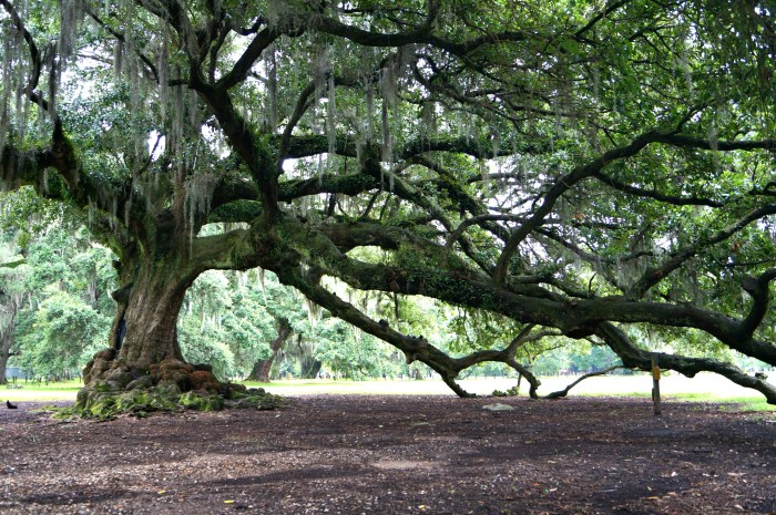 Image result for the tree of life new orleans