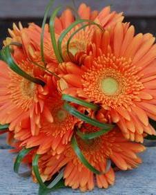 Букет от оранжеви гербери 15 броя - Онлайн магазин за цветя в саксия Magic Flowers