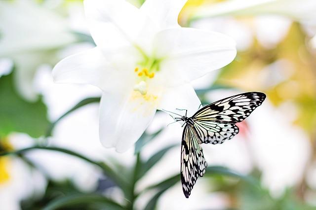 butterfly-1278815_640