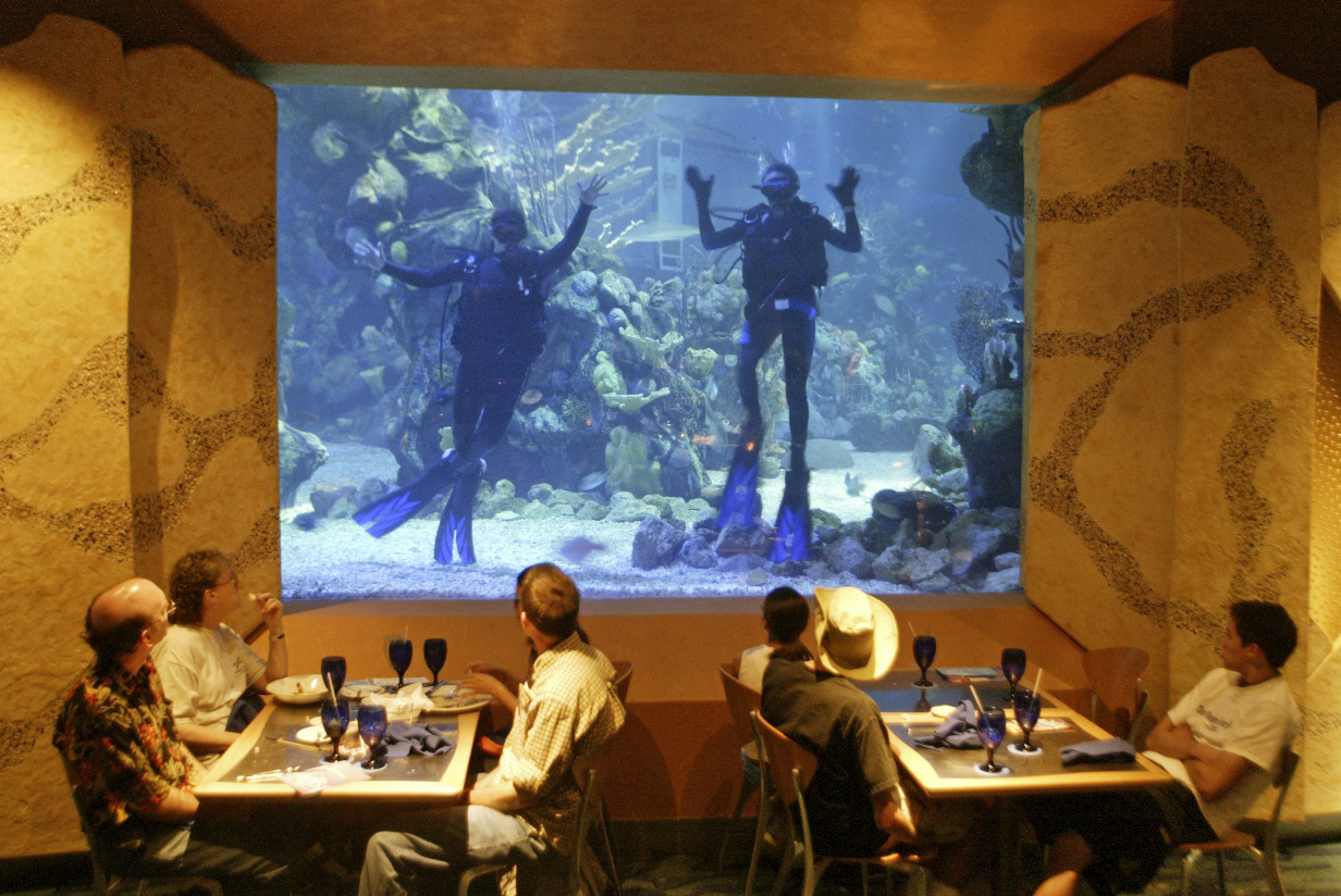 Coral Reef Restaurant Where Guests Dine With The Fishies