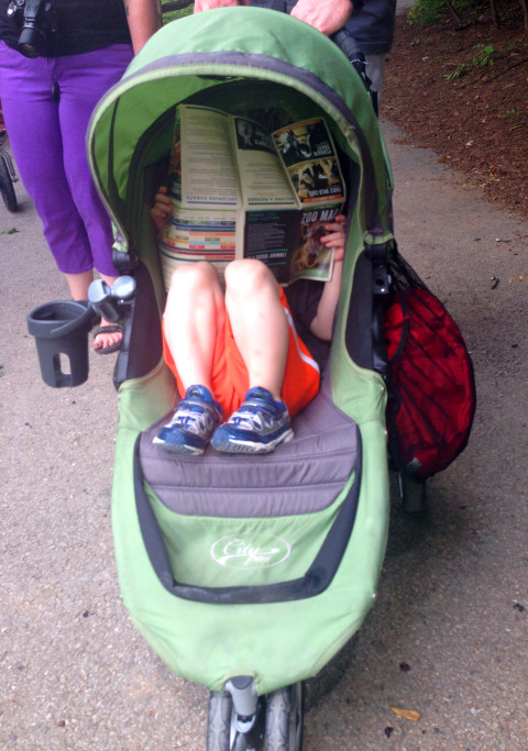 Boy studies map in stroller