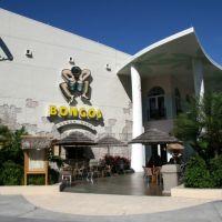 Bongos Cuban Cafe Express