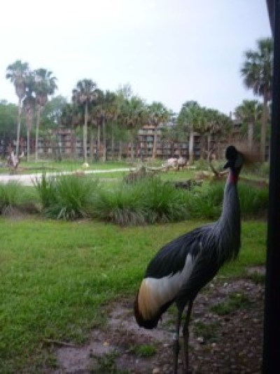 Photo by Danielle Meyer, Animal Kingdom Lodge Bird