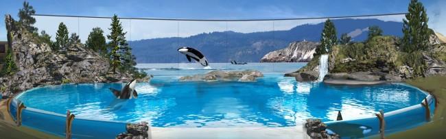 Courtesy of SeaWorldCares.com