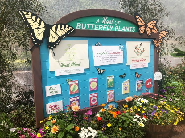 butterfly house at 2021 epcot flower and garden