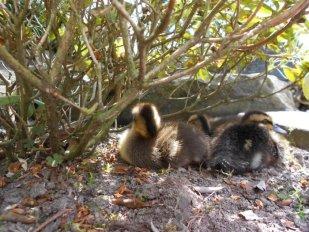 Naptime under a bush