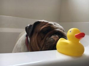 21 ways to make your home smell great magical mama blog dog bath cleaning