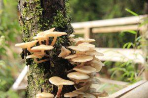 hongos en parque alerce andino