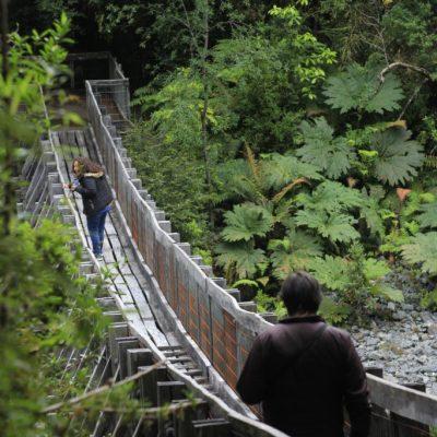 Parque Alerce Andino caminando