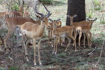 Impala Nursery