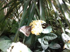 Butterfly exhibition_Natural History Museum_4