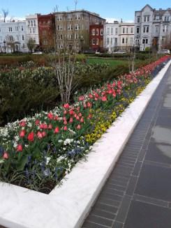Flower bed_outside Supreme Court