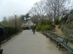 Central Park_2