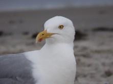 """Seagull"""