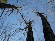 """Treetops"""
