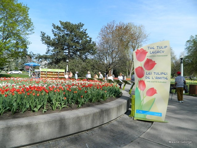 Tulips in Major's Hill Park, Ottawa Ontario Tulip Festival