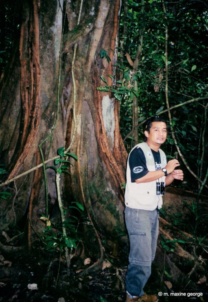 Zuan tells us about the vegetation in the jungle