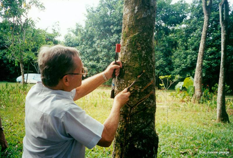 Rudinara Malaysia Dato' Rudin Salinger explains how to open a coconut. Rudinara Malaysia