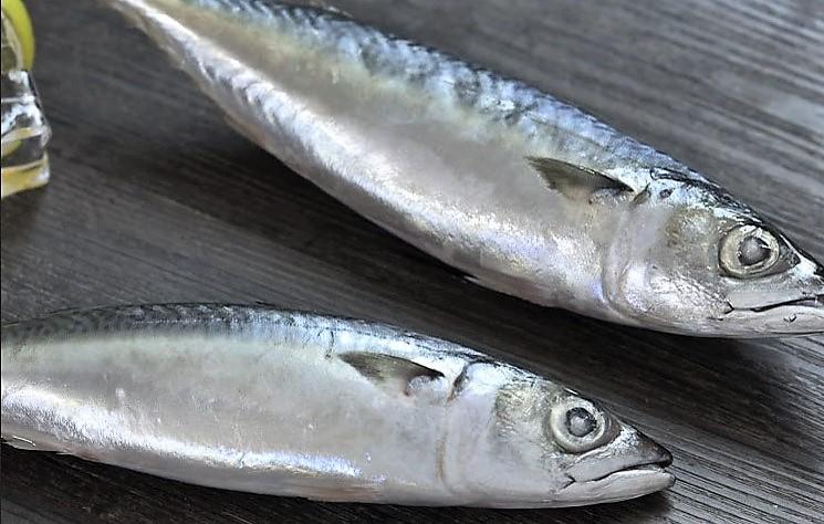 ماهی خال خال در خانه بسیار خوشمزه است