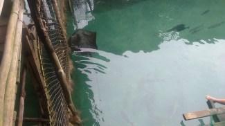 sibadan-fish-cage