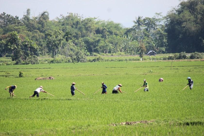 Peningkatan Daya Saing Perekonomian Indonesia