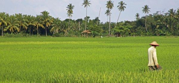 Kedudukan Petani dalam Islam