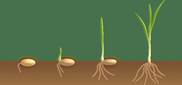 Modul IPA Kelas 8 Sistem Gerak pada Tumbuhan