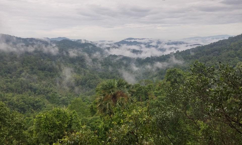 J'ai testé la Gibbon Experience au Laos !