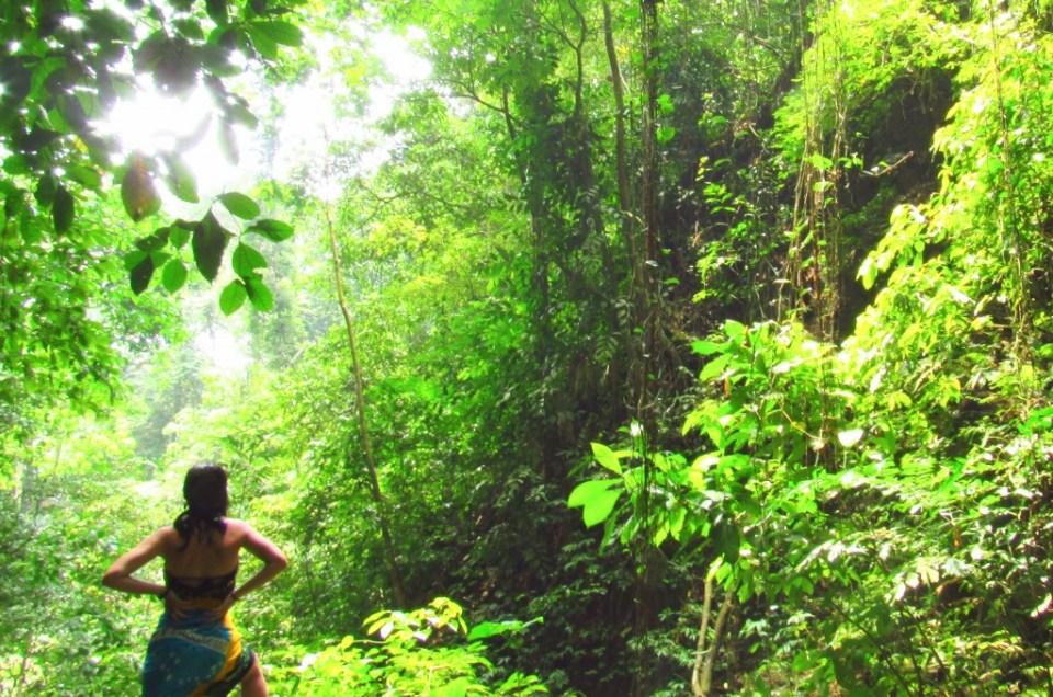 Voyager à Sumatra : la nature sauvage à l'état pur
