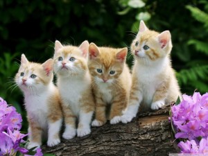 Have some more kittens.