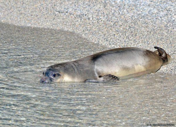 MOm Εθνικό Θαλάσσιο Πάρκο Αλονnήσου (5)