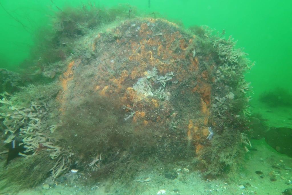 Sea Mine