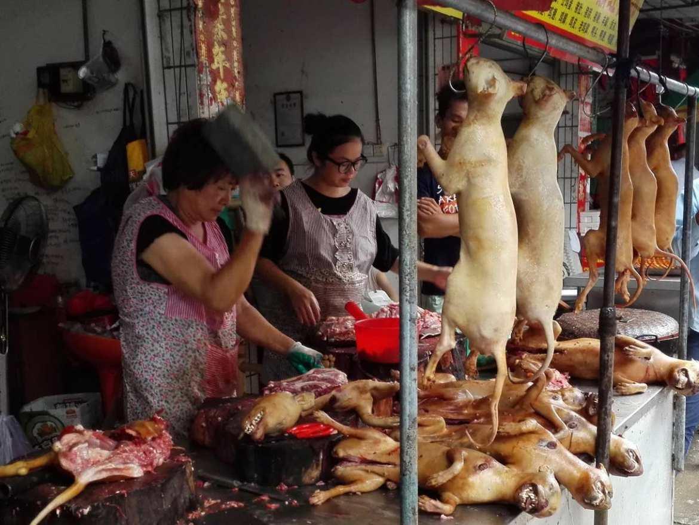 China Dog Trade