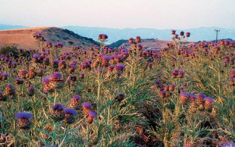 Πανεπιστήμιο Θεσσαλίας: Ενεργειακά φυτά για την παραγωγή στερεού καυσίμου