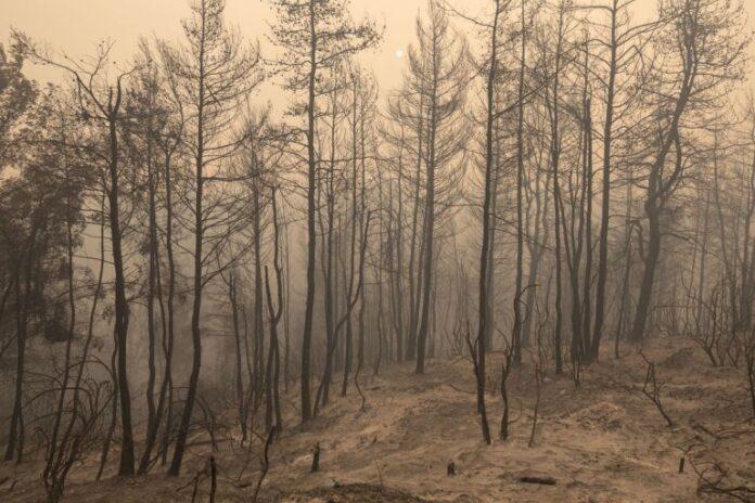 Φωτιά στην Εύβοια – «Έχω σταματήσει να ελπίζω» – Συγκλονιστικές μαρτυρίες των κατοίκων