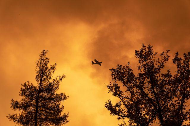 Φωτιές στην Ελλάδα – Οι δασολόγοι του ΑΠΘ εισηγούνται άμεσα μέτρα