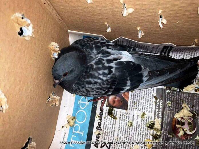 Τέσσερις διασώσεις πτηνών από την Ένωση Παλαιών Προσκόπων