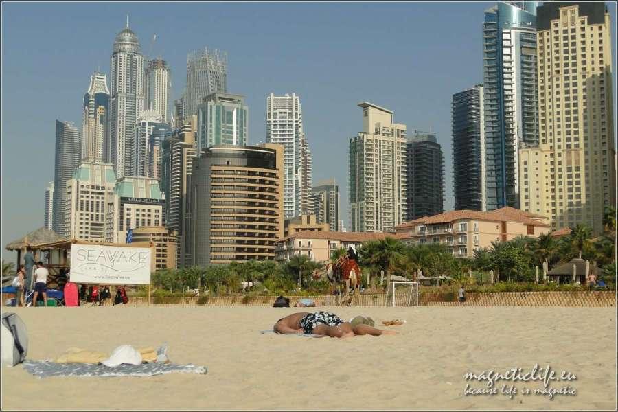 Wielbłąd naplaży Jbr beach